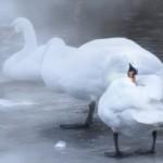 Naturfotograf Kristina Wendel