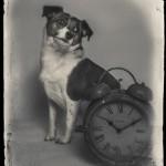 Hundfotograf Kristina Wendel