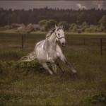 Hästfotograf Kristina Wendel