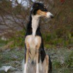 Kristina Wendel – Din hundfotograf